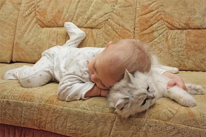 малышь и кот