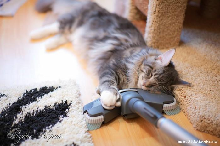 кошка и пылесос