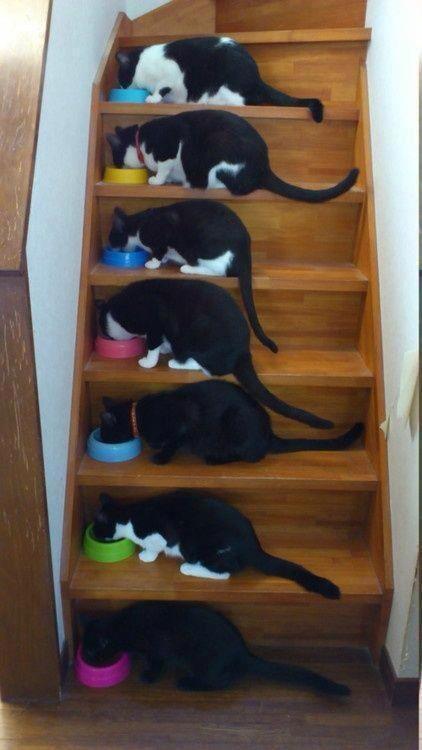 коты лестница