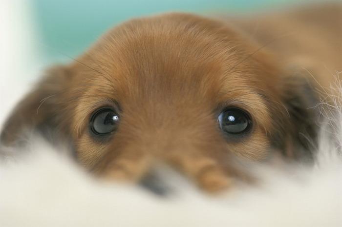 Если Вам понравилась картинка Щенок спит на тыкве из раздела Собаки.
