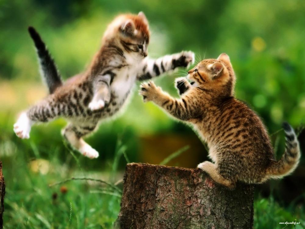 Драка котов что делать