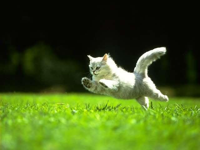 кот бегает