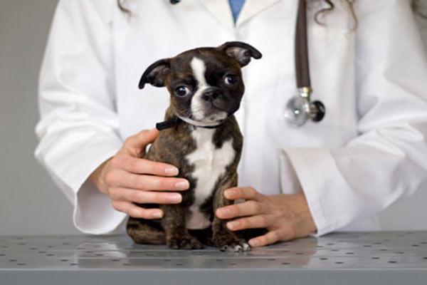 парвовирусный энтерит у собак симптомы лечение