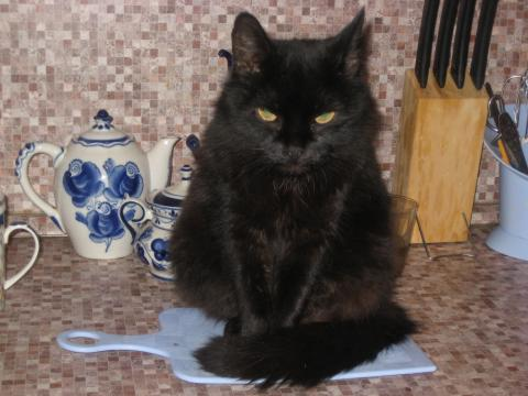 кот на столе кухонном