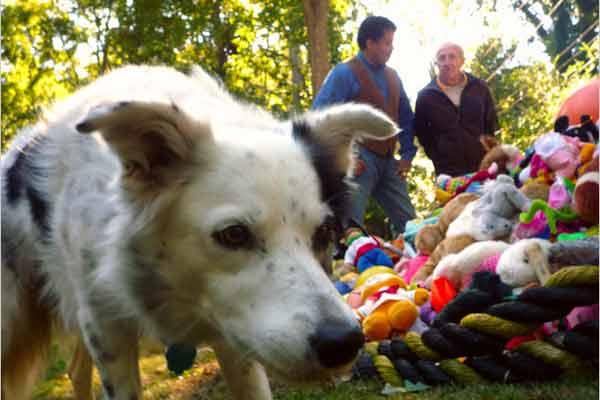 РИКО - Самая умная собака в мире