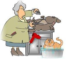 У хорошего парикмахера собачка с легкостью сама позволит себя стричь, даже если рядом кошки