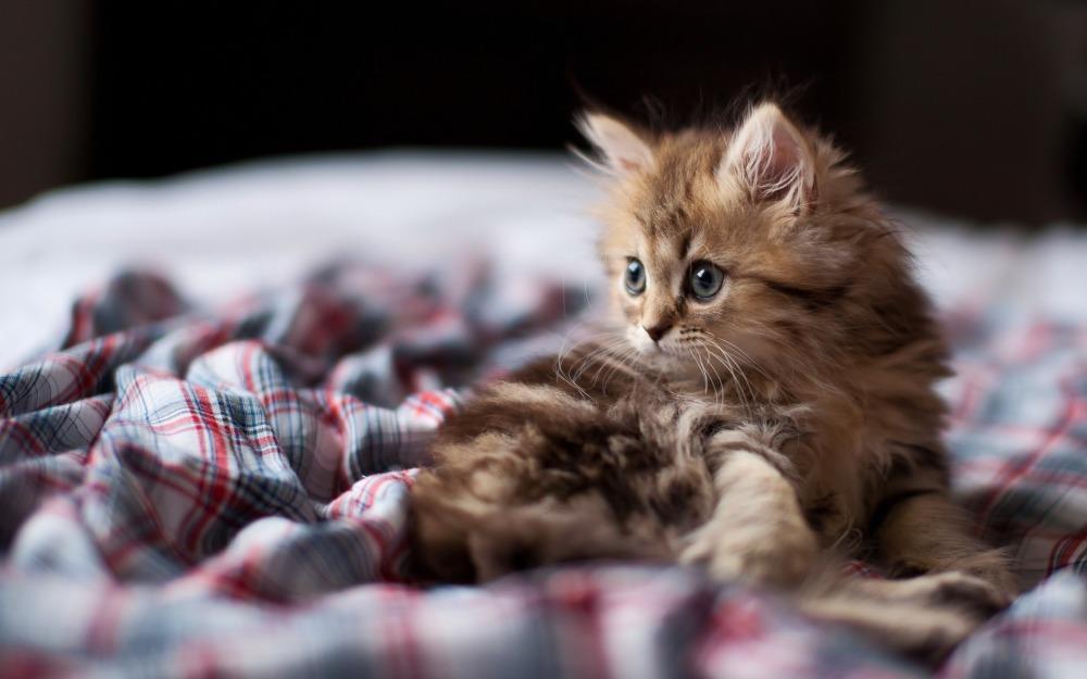 котенок приюта