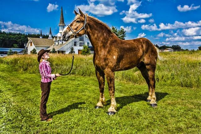 Самая крупная лошадь Самой крупной лошадью в мире является Большой Джейк – 9-летний конь бельгийской породы высотой в 20 ладоней 2,75 дюймов или 210.19 см. Живет на ферме в Пойнетте, штат Висконсин, США.