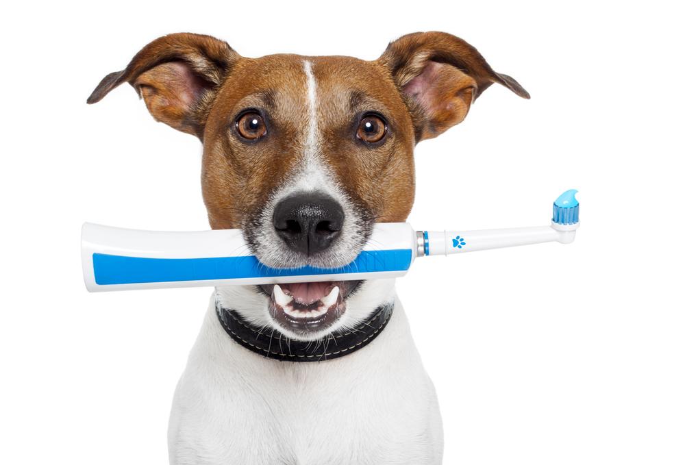 Чистка зубов ультразвуком собак Мытищи