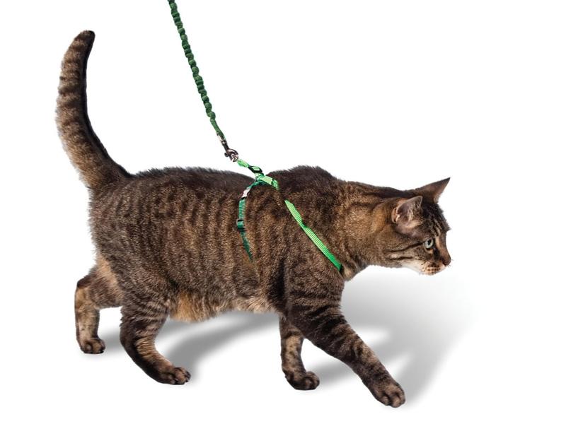 гулять с кошкой на шлейке
