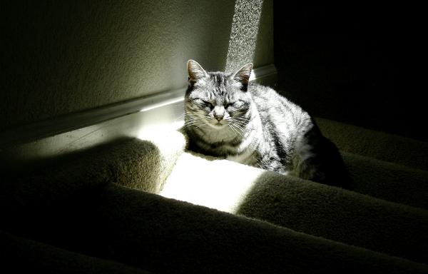 кот лестница