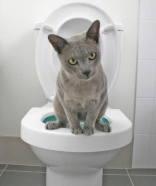 кот на талчке