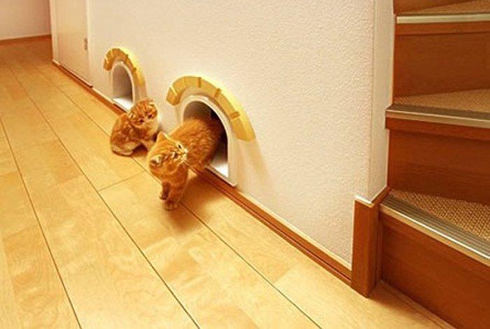 котенок лестница