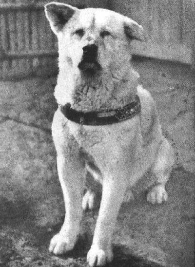 ХАЧИКО Преданный пес, ставший в Японии национальным героем