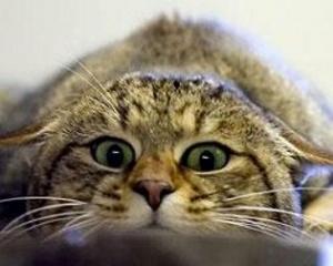 кот шалит