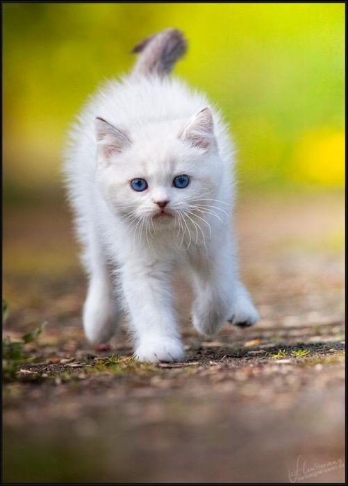 котик бежит