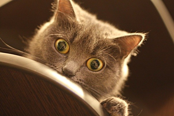кот глаза