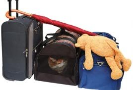 Путешествие с кошкой. Что нужно знать и взять?