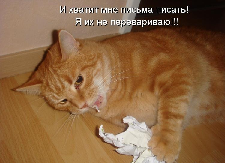 кот ест бумагу