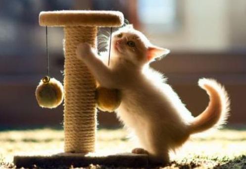 кот игрушка