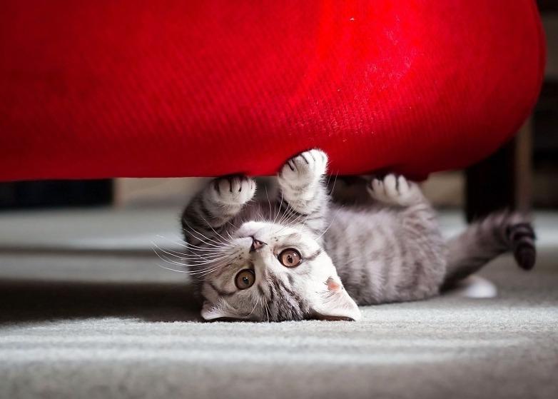 кошка под кроватью
