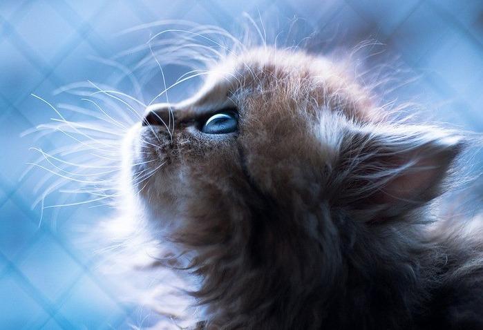 имя кошки