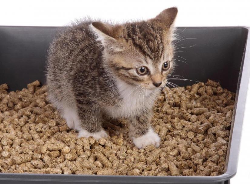 котенок на лотке