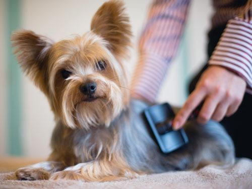 Стрижка собак на дом