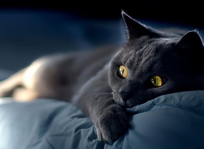 кошка кровать